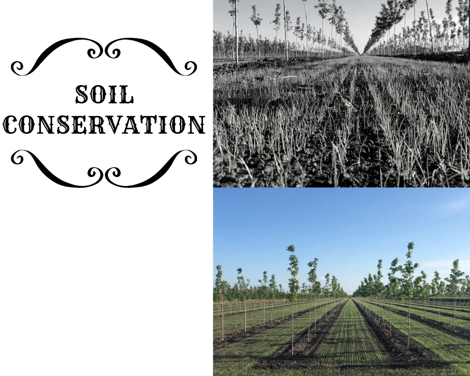SGN Trees Soil Conservation