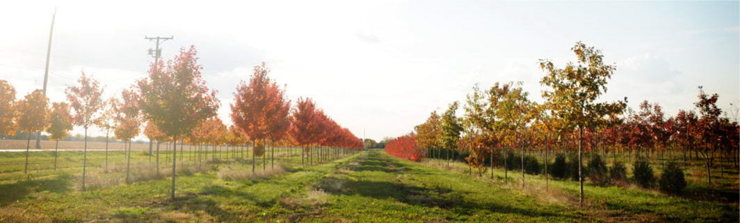 Fall in the SG Nursery
